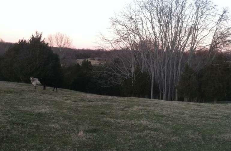 Battlefield Pastures