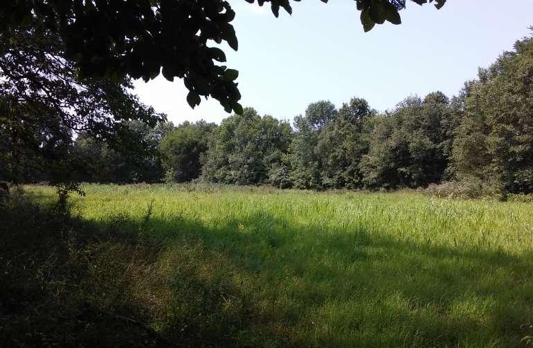 Majestic Macktown Meadow