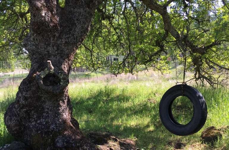 Campsite #5 - Tree Swing