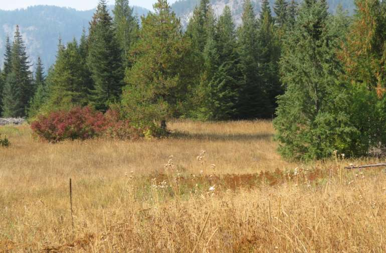 The big meadow at the back has many possibilities for tucking a camp into the trees or bigger groups out in the open, as a base area for further exploring. Pictures were taken at the end of summer, so it is dry, fall colors. Every season has it's colors!