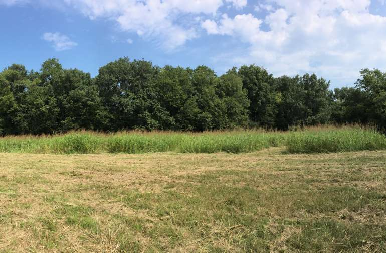 The Meadow at Bledsoe Creek