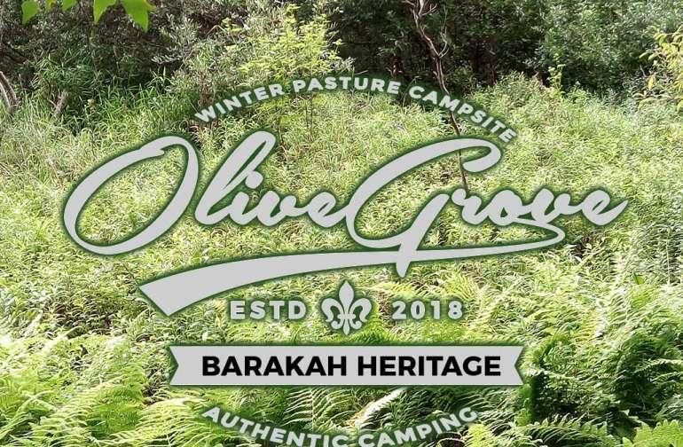 Barakah Heritage Farm Olive Grove