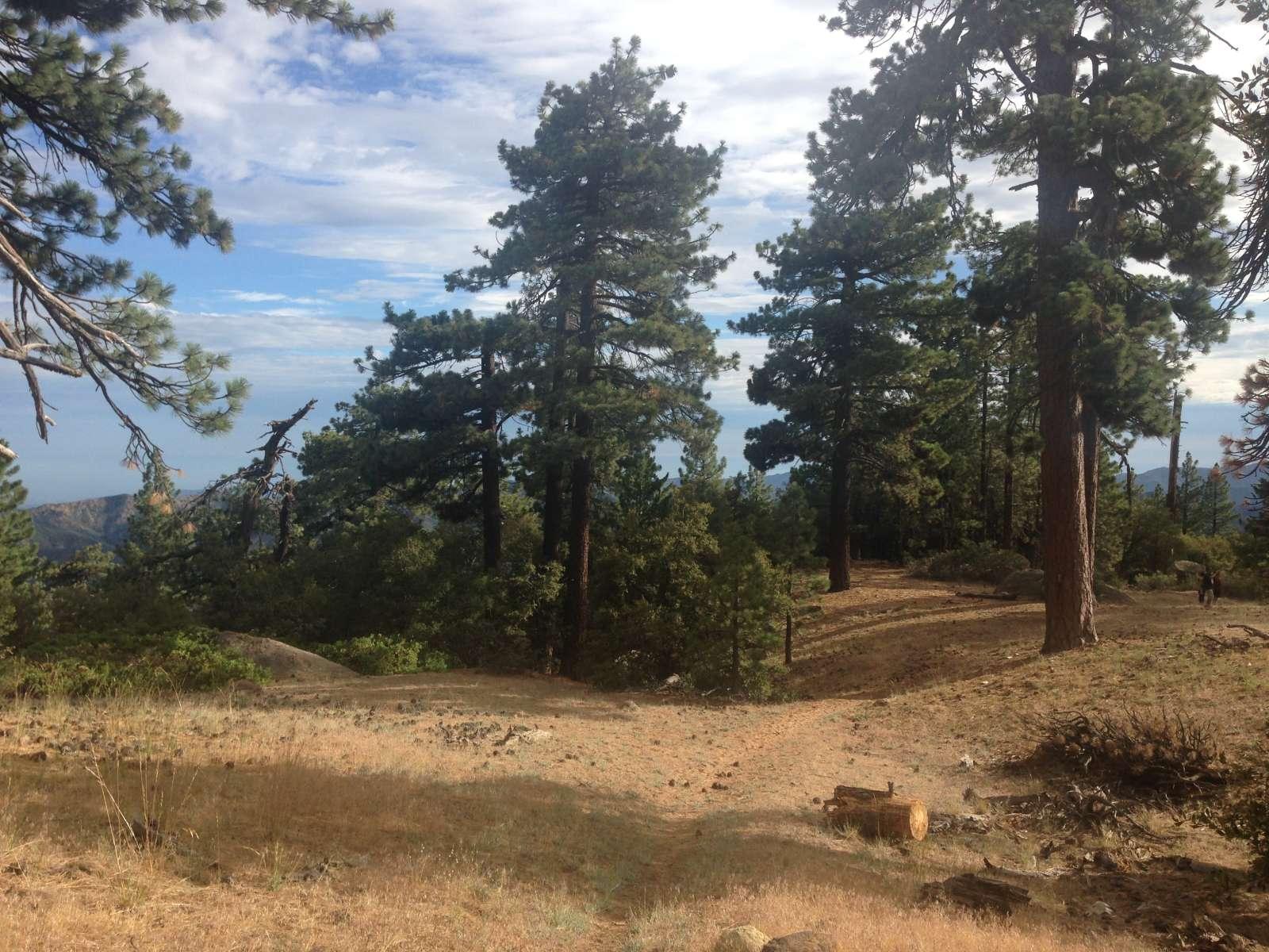 Reyes Peak Campground, Los Padres, CA: 2 Hipcamper Reviews