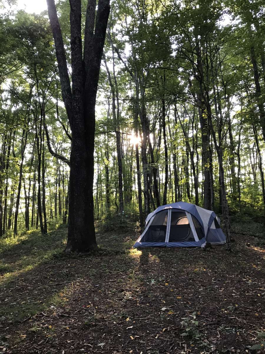 Greenheart Forest , Greenheart Place, NC: 54 Hipcamper
