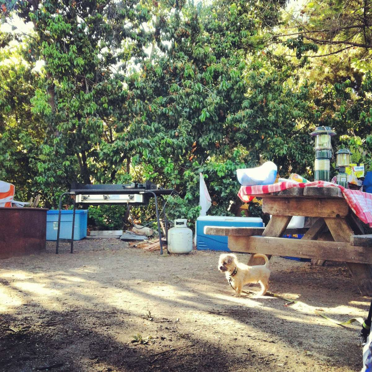 San Mateo Campground, San Onofre, CA: 7 Hipcamper Reviews ... on doheny sb campground map, doheny state beach camping map, doheny campsite map, mueller state park campground map,