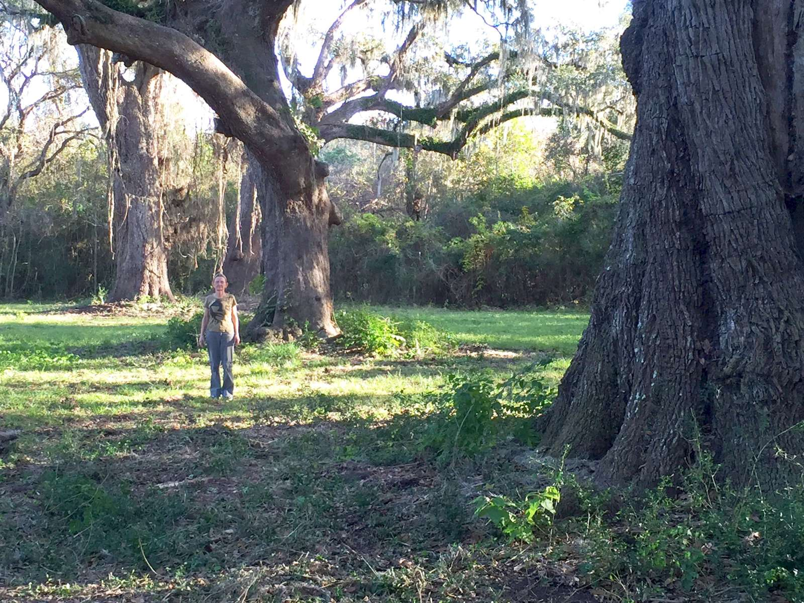 Very pity woodlands antebellum swinger reply