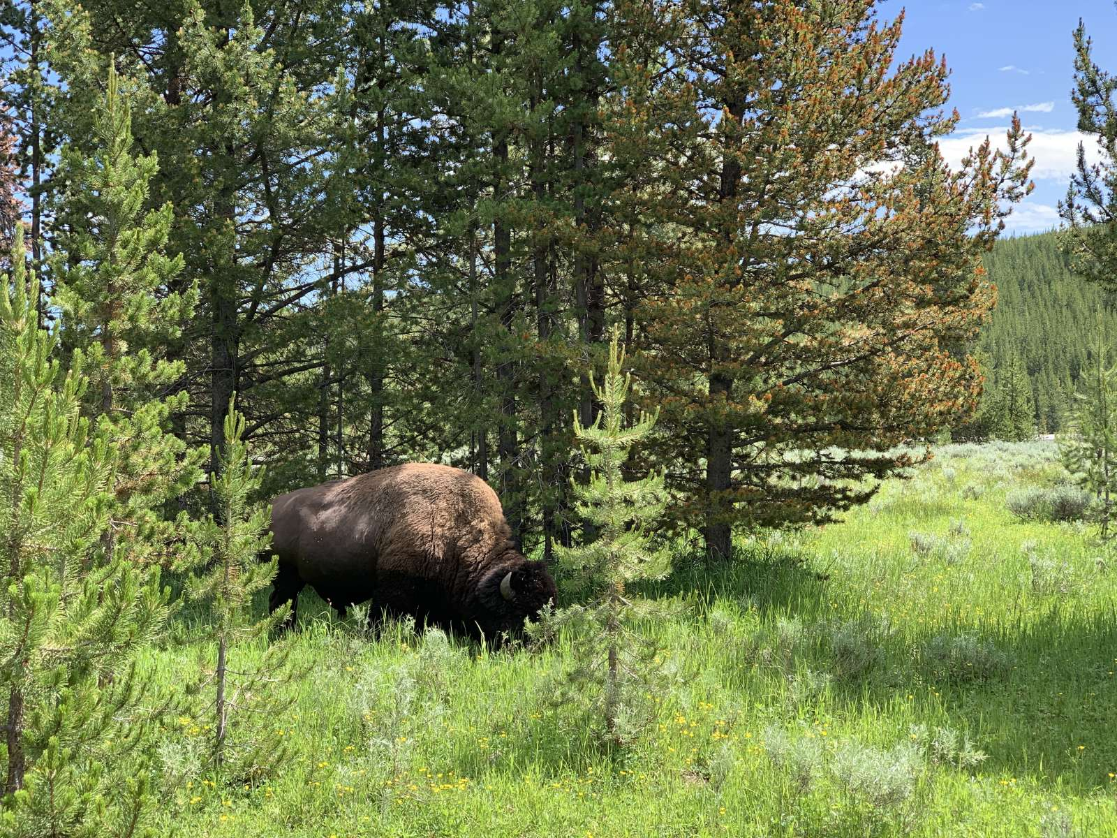 Indian Creek Campground, Yellowstone, WY: 5 Hipcamper